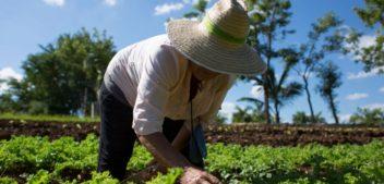 Salta busca potenciar y expandir sus producciones orgánicas para entrar en el mercado de exportación
