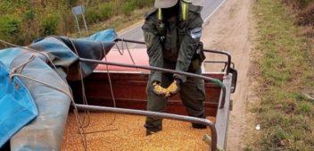 Secuestran en Salta 180 toneladas de granos de contrabando y preocupa el uso ilegal de las rutas de la provincia
